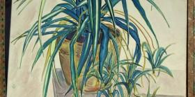 Spider plant art